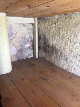 Mögel på källar vägg