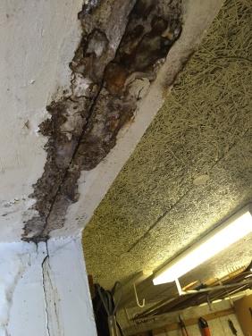 svart mögel och fukt från betongbjälklaget